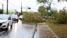 Vento derruba árvore