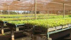 Gestores recebem curso sobre coleta de sementes e produção de mudas