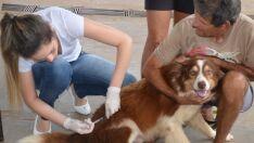 Campanha de vacinação antirrábica chega nos distritos de Arapuá e Garcias