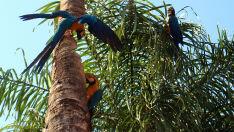 Fauna sul-mato-grossense