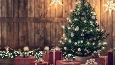 Como escolher a árvore de Natal perfeita para sua casa