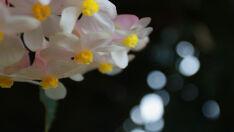 Beleza da Flora