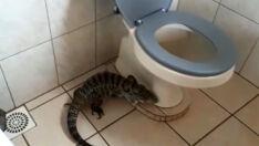 Lagarto é capturado dentro de banheiro em escola na Capital