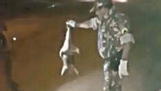 Tamanduá-mirim é capturado em bairro na Capital