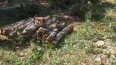 Dois produtores rurais são flagrados derrubando árvores ilegalmente