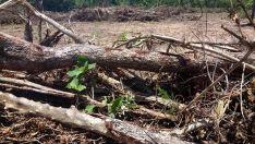 Empresa é multada em R$ 7,5 mil por exploração de madeira