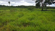 Fazendeiro é multado em R$ 9 mil por desmatamento ilegal