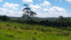 Fazendeira é multada em R$ 93 mil por desmatamento em Sidrolândia