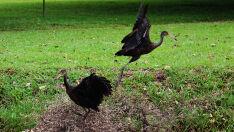 Pássaros brincando