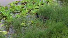 Fauna e flora Lagoa Maior