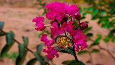 Encanto de flor rosa