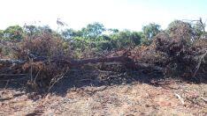 Assentado é multado em R$ 4mil por desmatamento ilegal