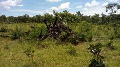 Pecuarista paulista é multado em R$ 9 mil por desmatamento ilegal