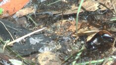Moradora flagra larvas em água parada no bairro Vila Nova
