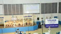 Sindicato Rural promoverá leilão de gado misto em Paranaíba