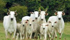 Brasil e Paraguai firmam acordo para exportação de bovinos