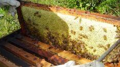 Três Lagoas está entre as cidades que mais produzem mel em MS