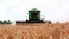 Itaporã é o município que mais produz soja por hectare em Mato Grosso do Sul