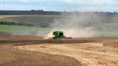 Produção de grãos volta a nível histórico com 232 milhões de ton