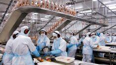 União Europeia publica decisão de boicote à exportação de aves