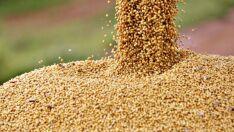 Conab prevê 232,6 milhões de toneladas de grãos para safra 2017/18