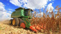 Com perda de 30% na safra do milho, cresce procura pelo seguro rural