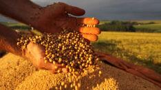 Aprosoja MS divulga safra de grãos 2017/18