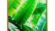 Quadros de botânica são uma ótima opção para aumentar o verde na sua casa