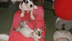 Gatos desaparecem e dono suspeita de envenenamento