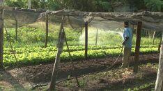Agronegócio é o setor com maior crescimento