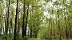 Exportações: Venda de produtos florestais cresce e setor já é segundo da balança do agro