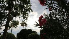 Semana começa com temperaturas baixas e previsão de pancadas de chuva