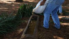 Capivaras recebem milho após escassez de alimentos