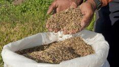 Governo divulga lista de produtos da agricultura familiar com descontos no financiamento de julho