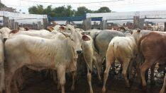 Pecuaristas de Mato Grosso do Sul pedem redução do ICMS