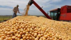 Soja e celulose têm maior impacto positivo na balança comercial do Estado