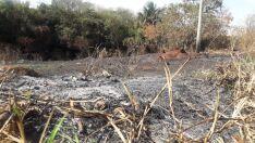 Queimada afeta biodiversidade, diz engenheiro agrônomo