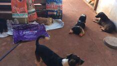 Defensora de animais promove rifa para custear despesas de pets