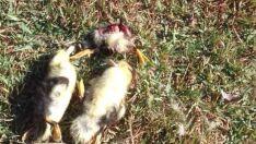 Patos mortos e furto de ovos indignam frequentadora do Espelho d'Água