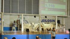 Sindicato Rural promove edição especial do leilão de gado de corte