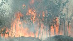 Mais de 400 casos de queimadas são registrados em Três Lagoas
