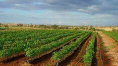 Três projetos finalistas no Prêmio Novo Agro são de Mato Grosso do Sul