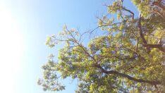 Temperatura cai e Paranaíba registra sensação térmica de 6ºC