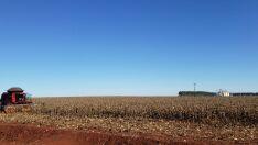 Venda de milho safrinha chega a 40% em Mato Grosso do Sul