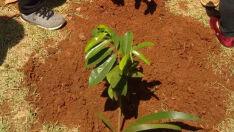 Crianças realizam plantio de mudas no Dia da Árvore