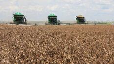 Mato Grosso do Sul deve chegar a 10 milhões de toneladas de soja na safra 2018/19