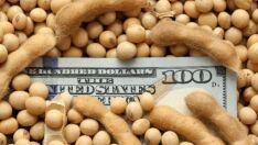 Negócios com soja na Argentina são retomados com novo imposto