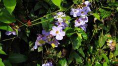 Sábado lilás