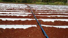 Técnica de irrigação concilia economia de água no campo com aumento considerável na produtividade