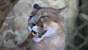 Cerca de 700 animais silvestres superlotam Cras